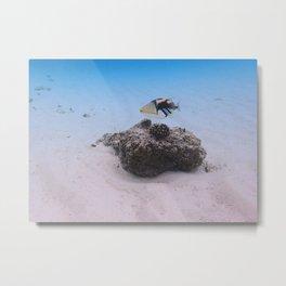 Tropical Maldives White Sand Lagoon Coral Fish Metal Print