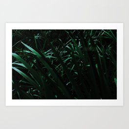 Grass blades basking in the sun - Abstract Art Print