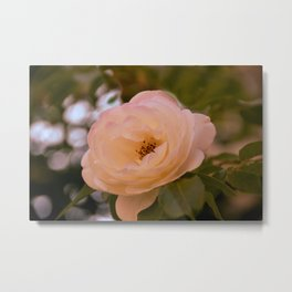 Romance in the Evening Metal Print