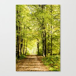 A pathway covered by leaves in a magical forest Canvas Print