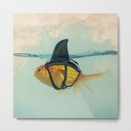 Goldfish with a Shark Fin RM02 Metal Print