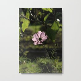 Pink and shadows Metal Print