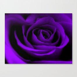 A Purple Rose Canvas Print
