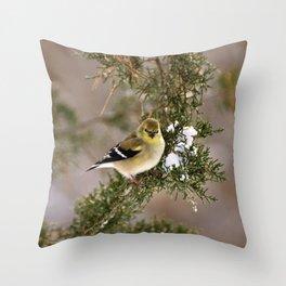 Professor Goldfinch Throw Pillow