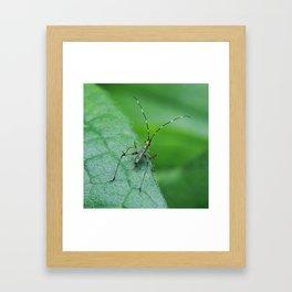 Baby Katydid Framed Art Print