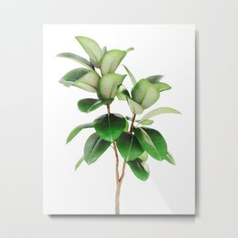 Indian Rubber Bush Metal Print