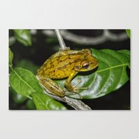 kermit Canvas Prints featuring Kermit 2.0 by Glenn Forman