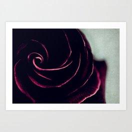 rose VII Art Print