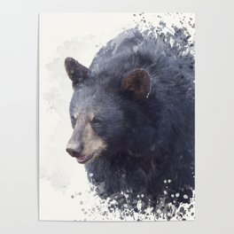 Black Bear portrait watercolor painting on white background Poster