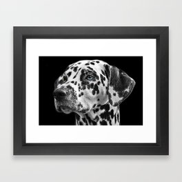 Dalmatian close up Framed Art Print