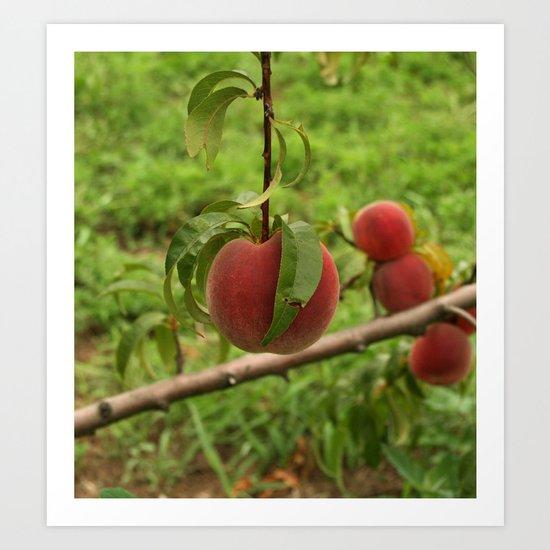 Hanging Peach Art Print