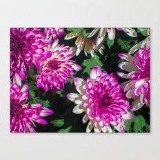 purply Canvas Print