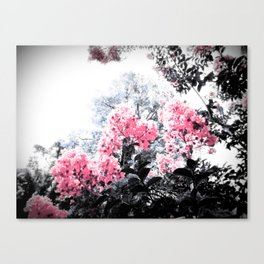 Pink Flowers Pop of Color Canvas Print