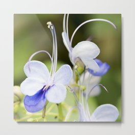 Blue Glory Bower Anthers Metal Print
