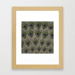 Peacock tail Framed Art Print