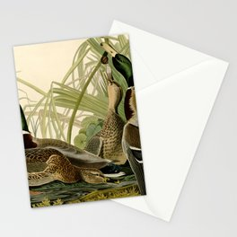 Mallard Ducks Stationery Cards