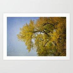 Look Up - Autumn Art Print