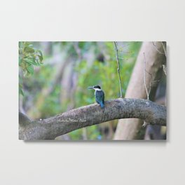 Collared Kingfisher Metal Print