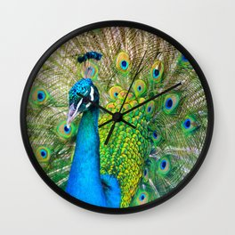 Beautiful Peacock (Color) Wall Clock