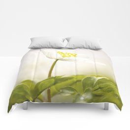 Wood Anemone Blooming in Forest Comforters