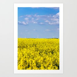 Yellow oilseed rape field under the blue sky with sun Art Print