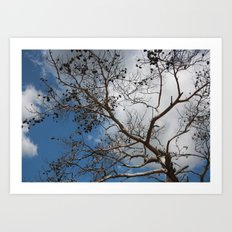 Skeleton of A Pine Tree Against Sky and Clouds Art Print