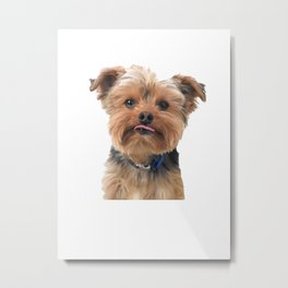 Yorkie Sticking Tongue Out | Dogs | Nadia Bonello Metal Print