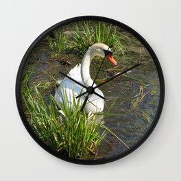 Sunning Himself Wall Clock