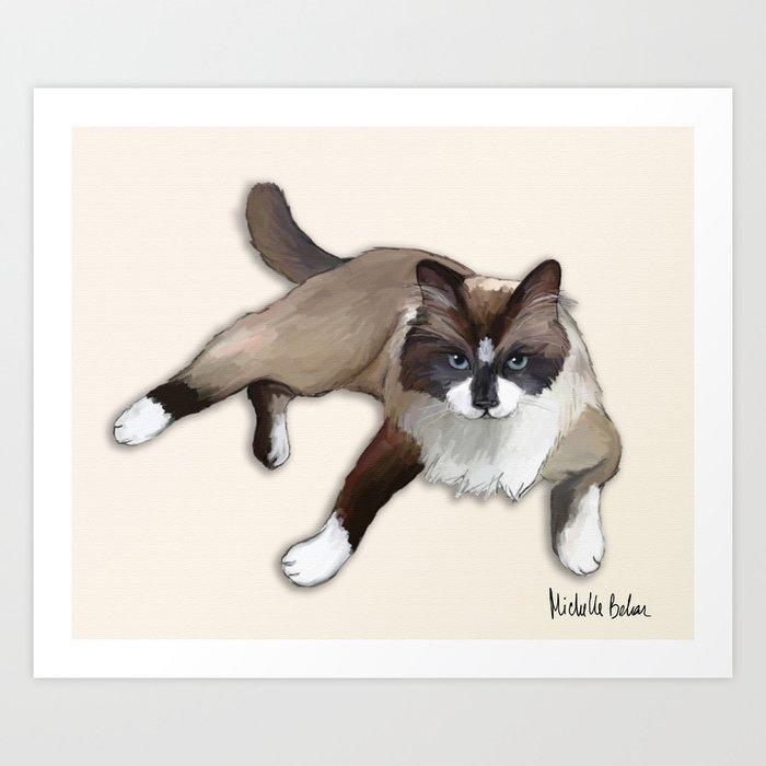 Ragdoll cat Art Print