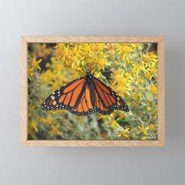 Monarch on Rubber Rabbitbrush Framed Mini Art Print