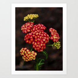 In the New Garden Art Print