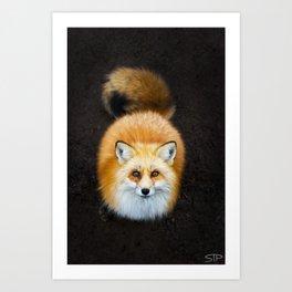 Patient Fox Art Print