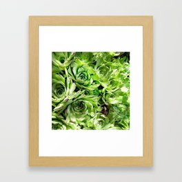 GREEN HENS N' CHICKS SEDUMS-SUCCULENTS Framed Art Print