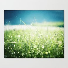Dew Nature Photography, Green Blue Morning Dew Sparkle, Colorful Grass Photography Canvas Print
