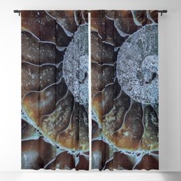Spiral Ammonite Fossil Blackout Curtain