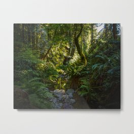 Early Morning, Steep Ravine Trail Metal Print