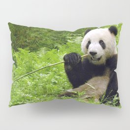 Exotic Super Dainty Grown Panda Bear Chewing On Bamboo Twig In Jungle Close Up Ultra High Res Pillow Sham