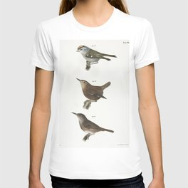 84 The Mocking-bird (Orpheus polyglottus) 85 The Cat-bird (Orpheus carolinensis) 86 The Wood Thrush T-shirt