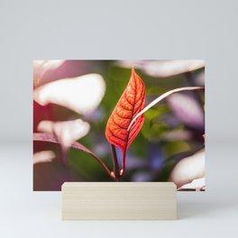 The Colors of Ferns  Mini Art Print