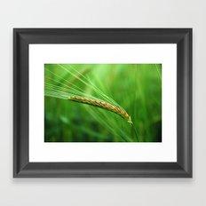 the corn Framed Art Print