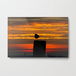 Gull at Sunrise Metal Print