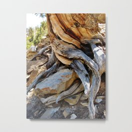 Roots and Stones Metal Print
