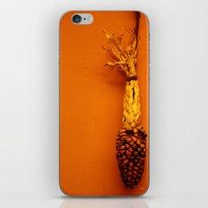 Hanging Corn  iPhone & iPod Skin