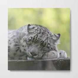 Leopard 2014-1001 Metal Print