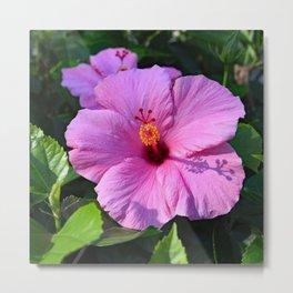 Hibiscus Pink II Metal Print
