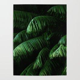 Lush green palms Poster