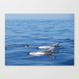 Beautiful risso´s dolphins in Tenerife Canvas Print