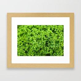 Cabbage pattern Framed Art Print