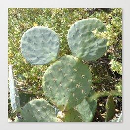 Mickey Cactus | Greek Nature Canvas Print