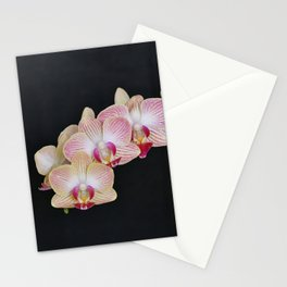 Purple Phalaenopsis Orchid Stationery Cards